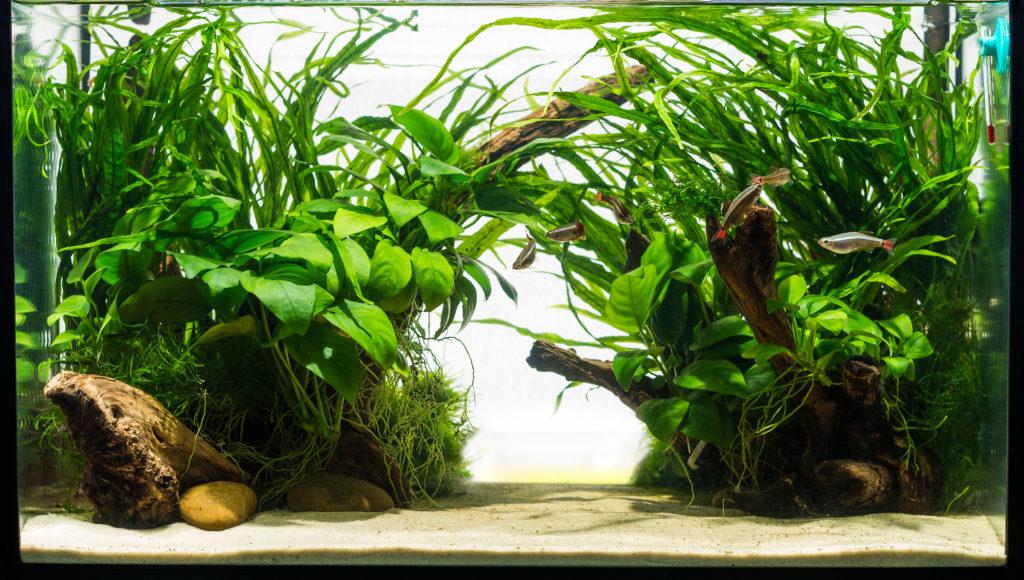 Akvarium Prova fritt i 14 dagar
